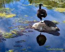 Enchanted Dreams - A matter of balance