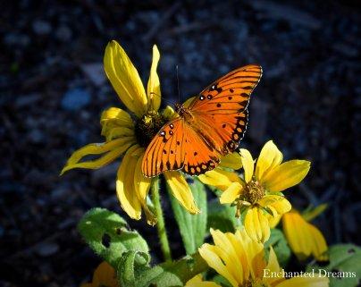 Spring in the BioPark, Albuquerque (Enchanted Dreams photo)