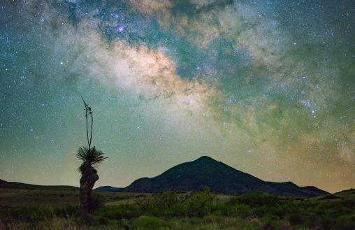 Robert Edmonds - Yucca in the night sky