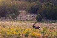 Light Benders Visuals - Elk stag