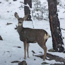 Light Benders Visuals - doe in snow